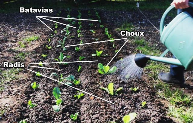 Culture Association Des Legumes Bio Parcelle N 8 Id Jardin