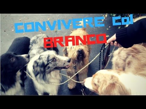 Bagno Cane ~ The best il cane ideas cool canes glace image