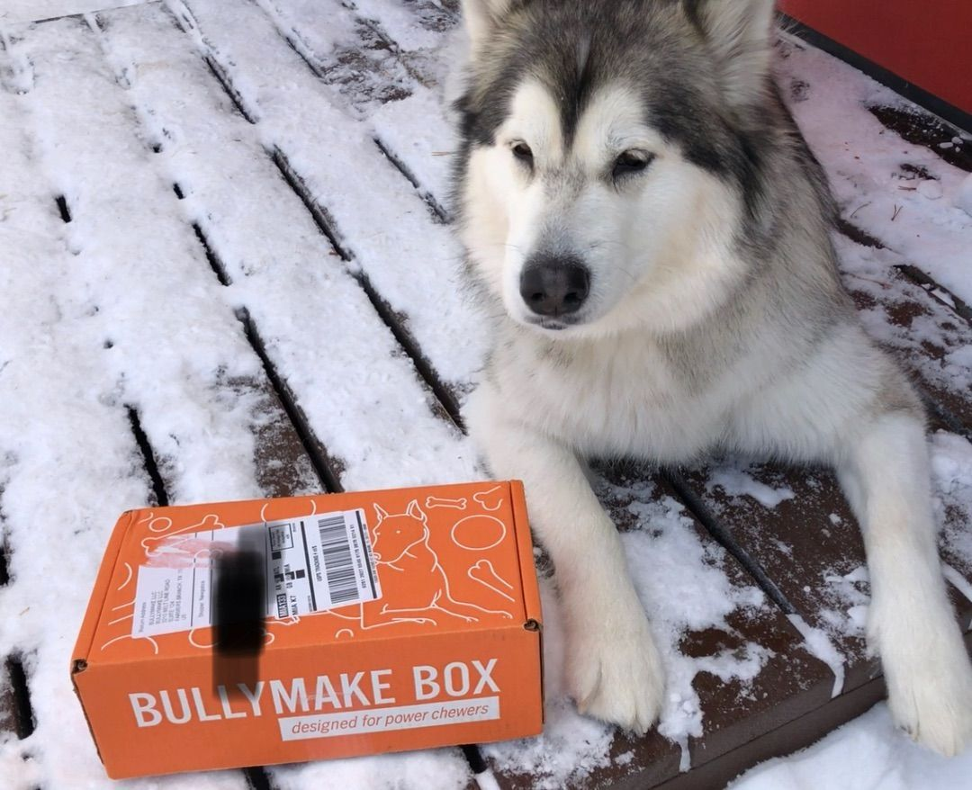 Opening Our December Bullymake In The Snow Was Epic