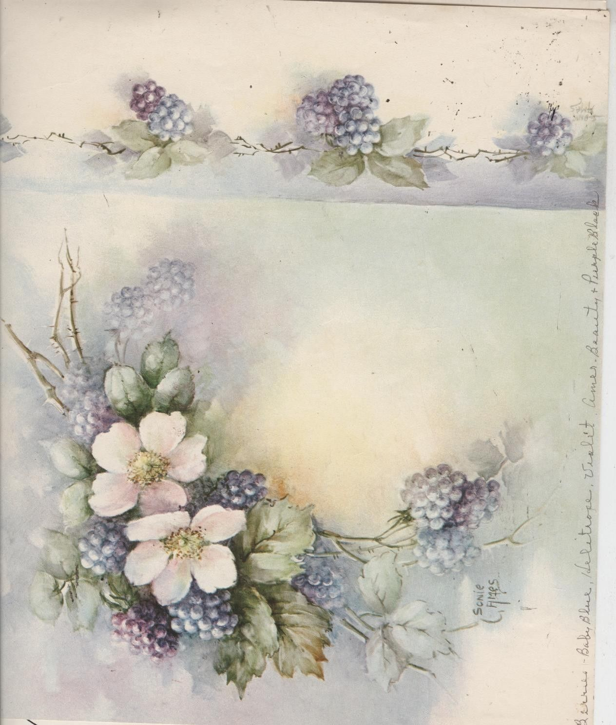 Blackberries Amp Wild Roses 49 By Sonie Ames China Painting