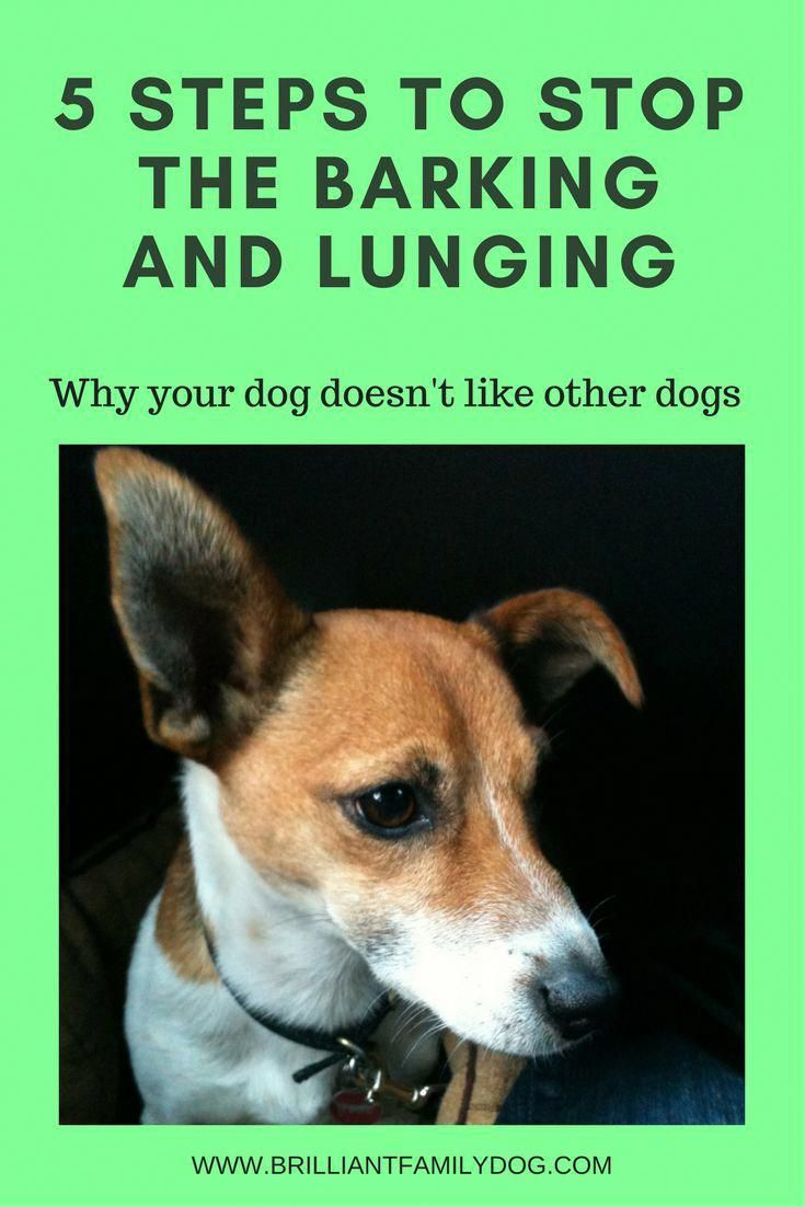 How to Take Care of Your Dog's Behavior Problems