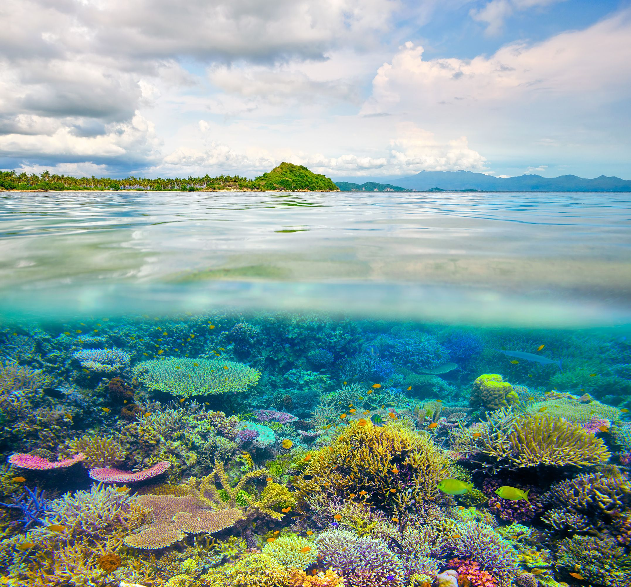 Scientists Have Discovered Pockets Of Coral Reefs Surviving In Warmer Waters With Images Wildlife Conservation Society Coral Reef Pictures