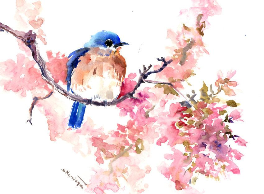 Bluebirds And Cheery Blossom Artwork Original Painting