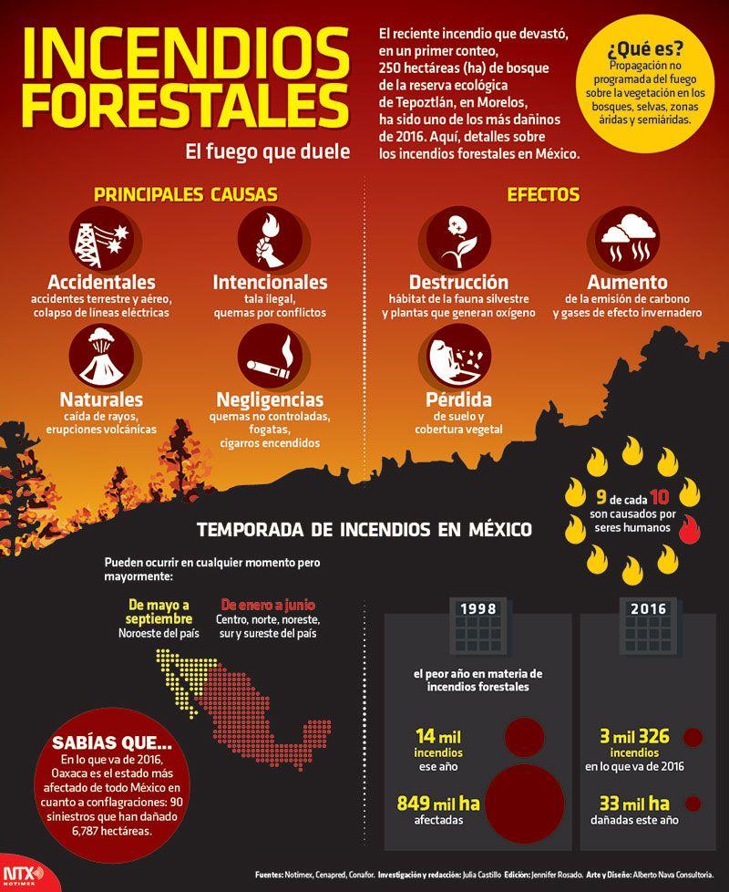 Sabíasque 9 De Cada 10 Incendios Forestales Son Causados Por Los Seres Humano Desastres Naturales Desastres Naturales Para Niños Ciencias De La Naturaleza