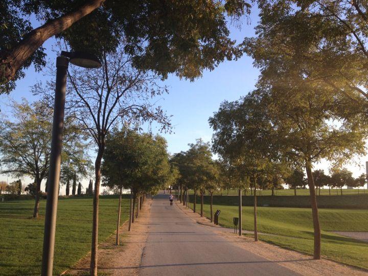 Parque Juan Carlos I Parques Parques Y Jardines Juan Carlos