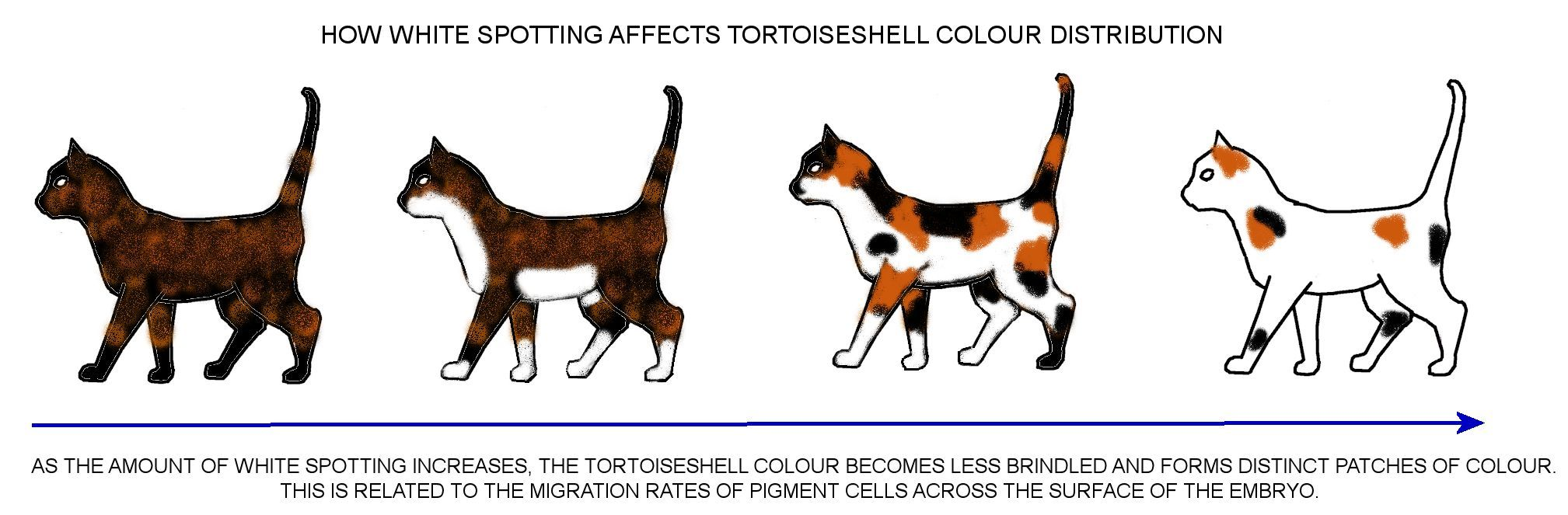 Colour And Pattern Charts Cat Colors Color Warrior Cats