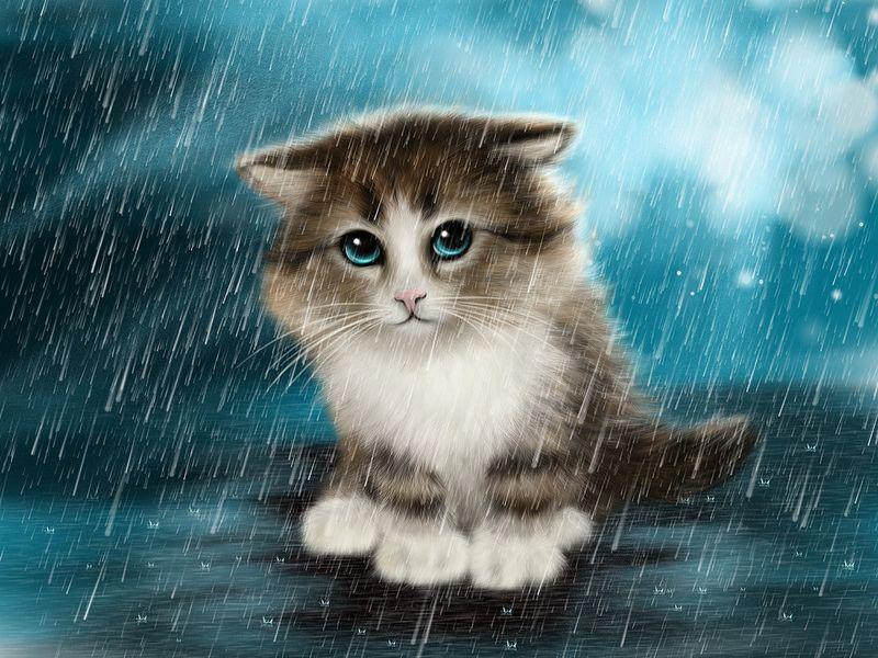 Rain Cute Cats Cute Animals Kitten Drawing