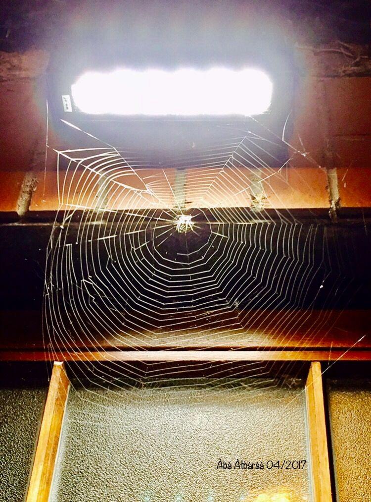 ماذا لو أن العنكبوت الذي قتلته في غرفتك كان طوال حياته يظن أنك شريكه بالسكن دوستويفسكي Abstract Artwork Abstract Artwork