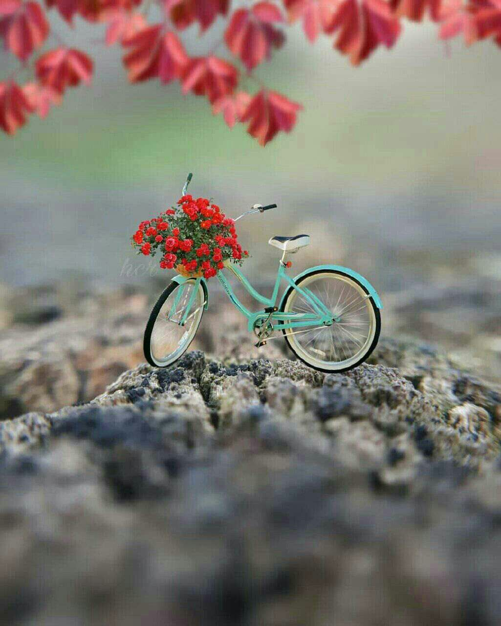 Beauty In Simple Cute Wallpaper Miniature Photography Dp Photos Cute Photography