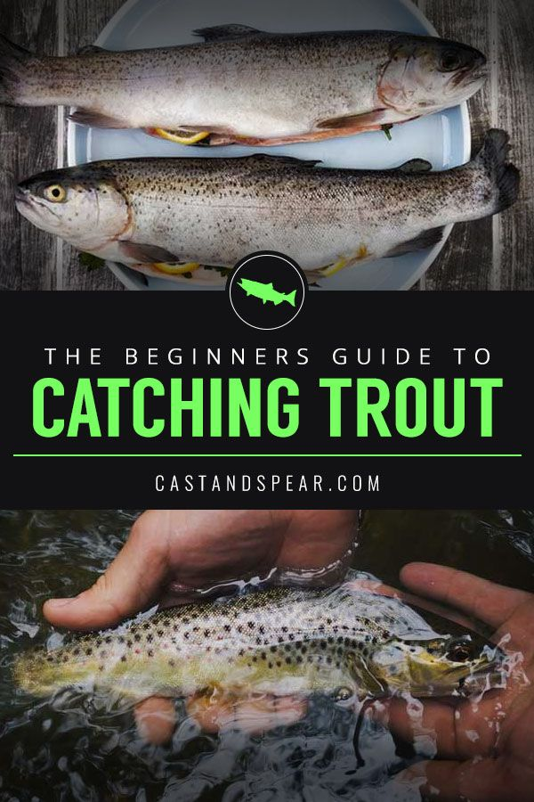 10 Tips for Catching Trout