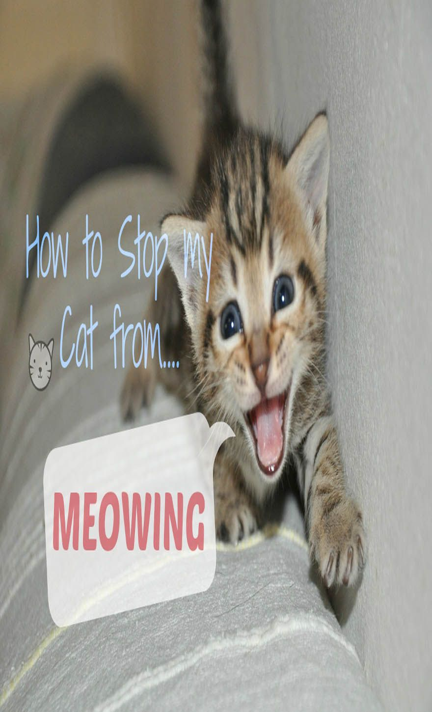 Excessive Meowing In Cat and What it Means Cats, Cat