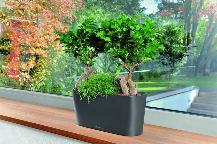 Windowsill Planter: Delta 20 Self-Watering Pot | Gardeners.com ...