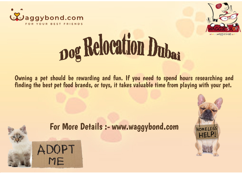 If You Re Leaving The Uae Or Moving To The Uae And Coping All Sorts Of Stressful Situations From Moving Companies New Home Pet Adoption Adoption Animal Rescue
