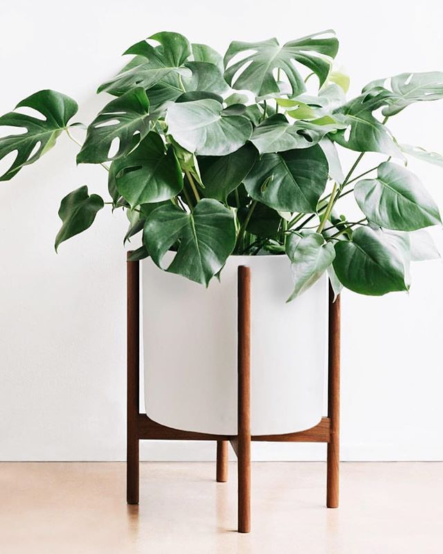 modernica study starting planter canada large price modern x case