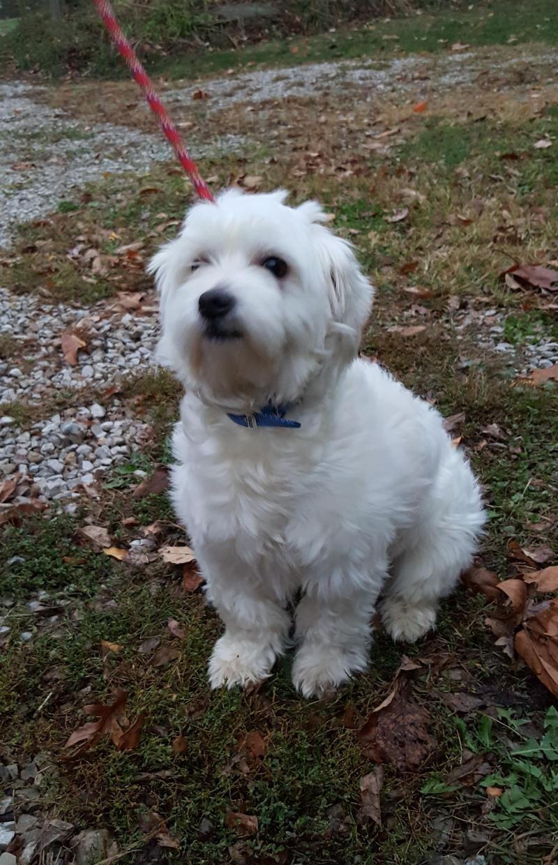 Adopt Sparky on Petfinder Dogs, Pets, Zanesville