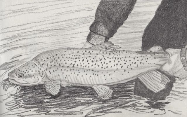 Scott's Creativity for Sanity: Catch and Release - Trout Sketch