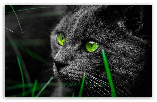 Cat Hd Desktop Wallpaper Widescreen High Definition Fullscreen Mobile Dual Monitor Cat Wallpaper Cats Cat Pics