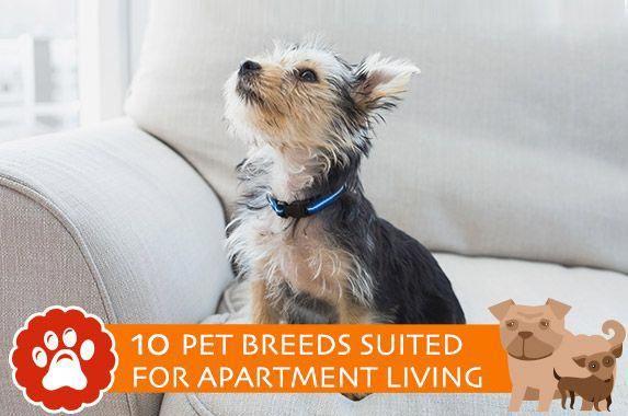 dog hacks for apartments #doghacksforapartments | Pet ...
