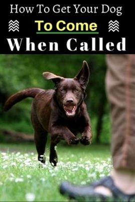 Dog Training E Collars Dog Training Utility Belt How To Dog