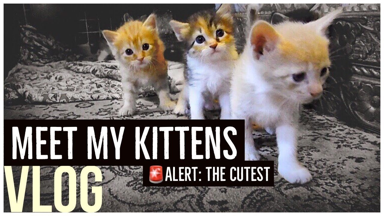 Kitten Videos Meet My Kittens Vlog 2018 Youtube Kitten Gif Kittens Vlogging