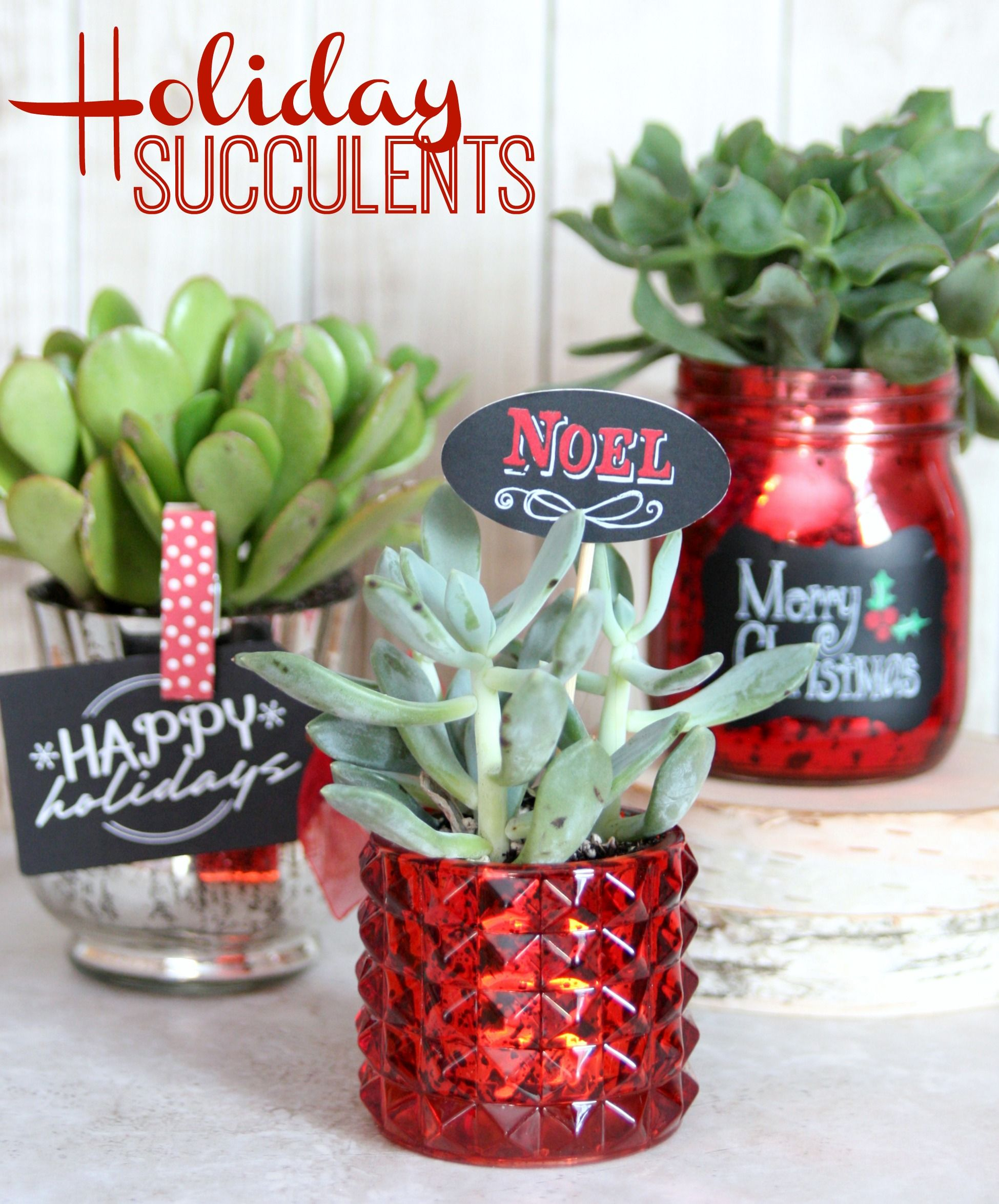 Christmas Succulent Gift Ideas.Holiday Succulents Handmade Gift Ideas Inexpensive