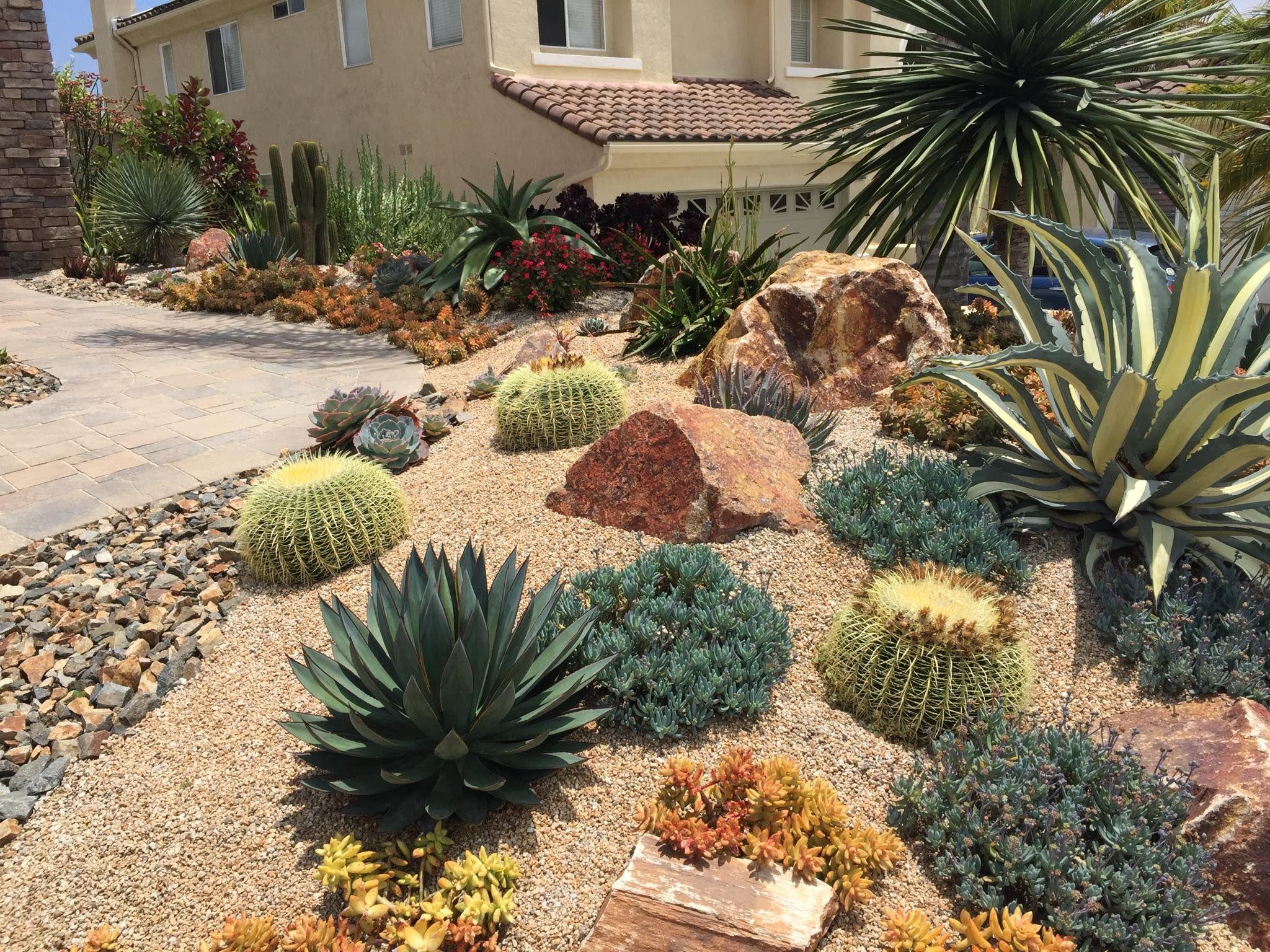Succulent garden of Chris Gleason in San Diego