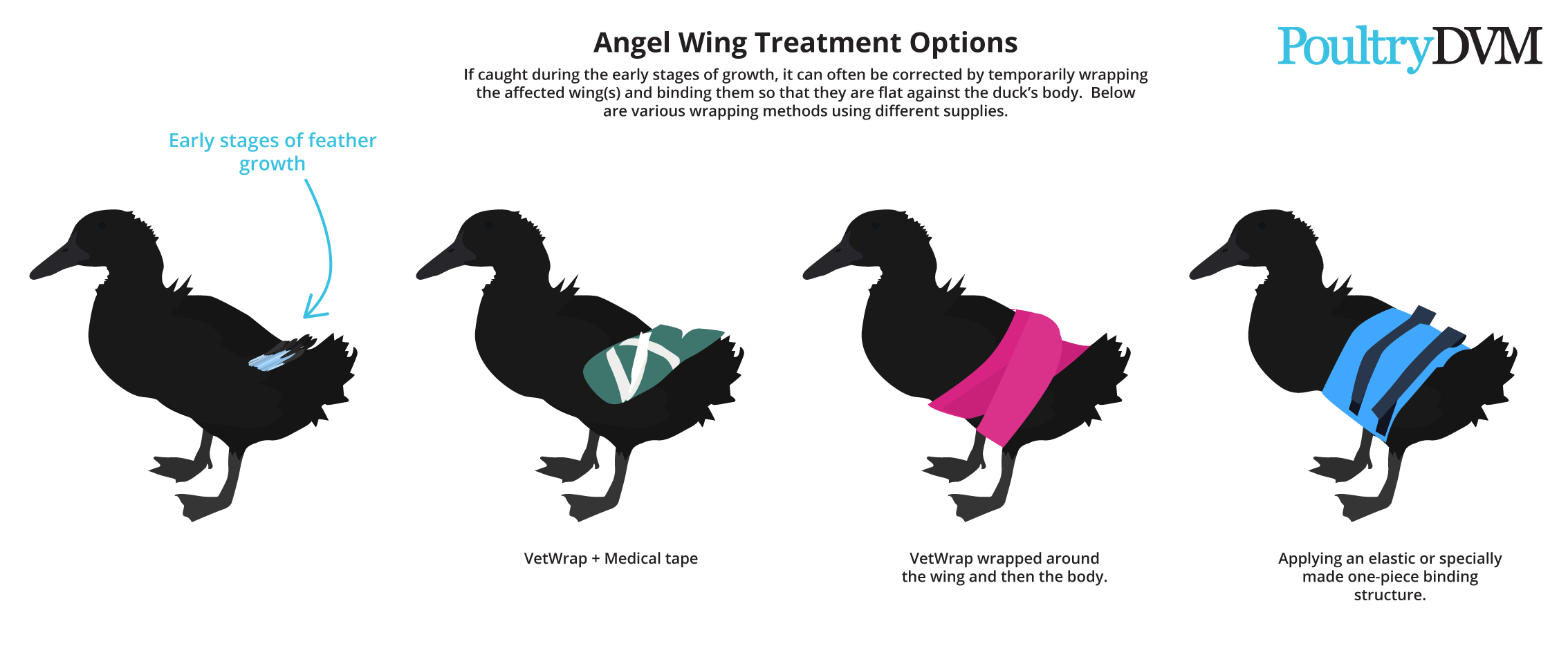 How To Fix Angel Wing In Ducks Backyard Ducks Angel Wings Duck