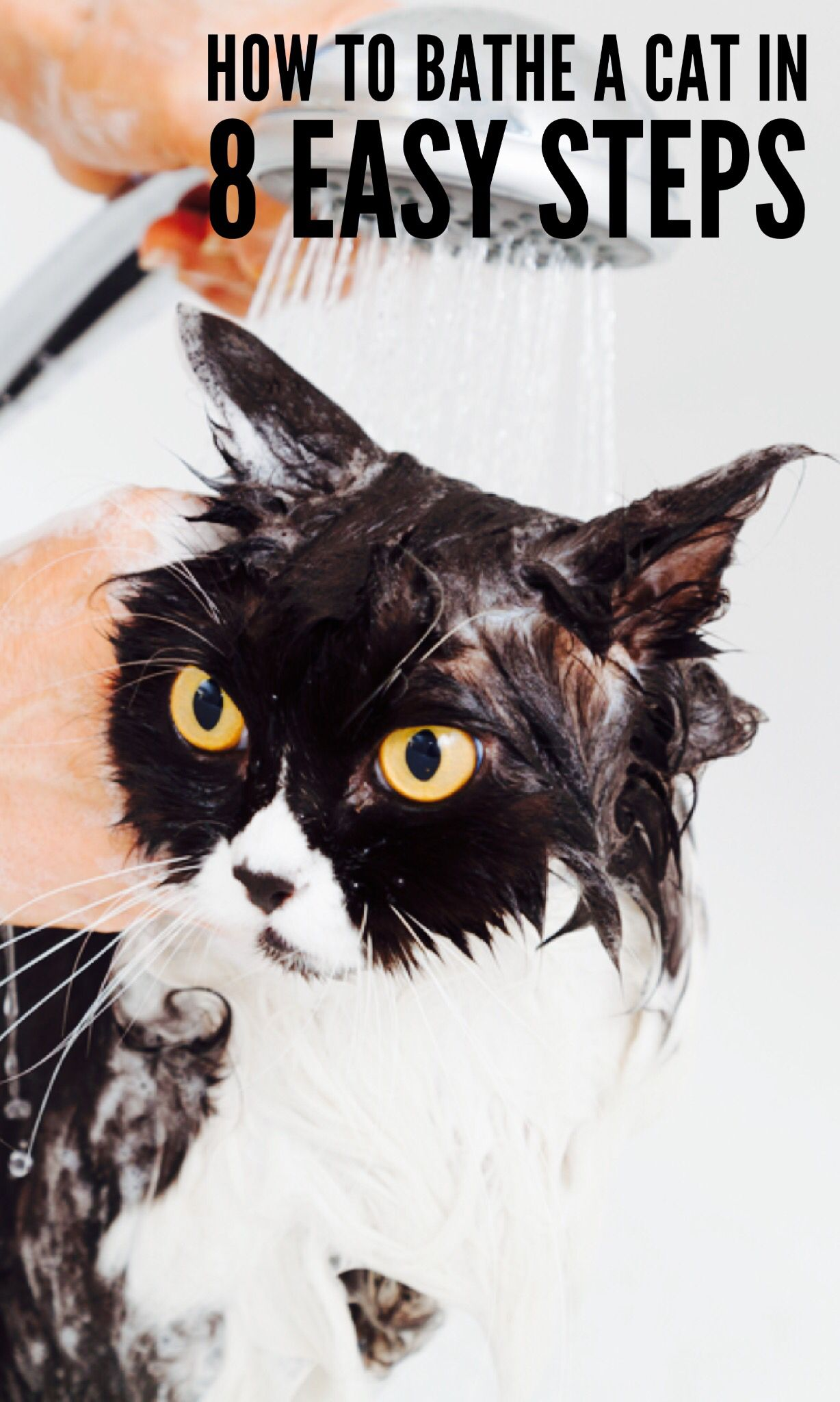 How To Bathe A Cat In 8 Easy Steps Cat Fleas Fancy Cats Cat Grooming