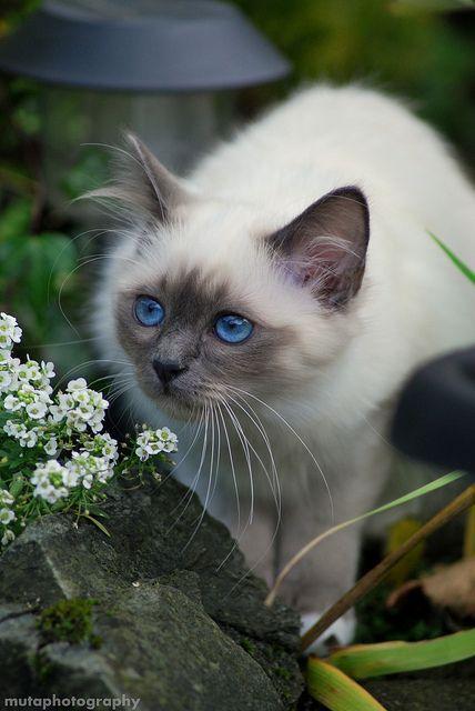 A Cat Is A Lion In A Jungle Of Small Bushes Indian Proverb Evcil Hayvanlar Hayvan Resimleri Sevimli Kediler