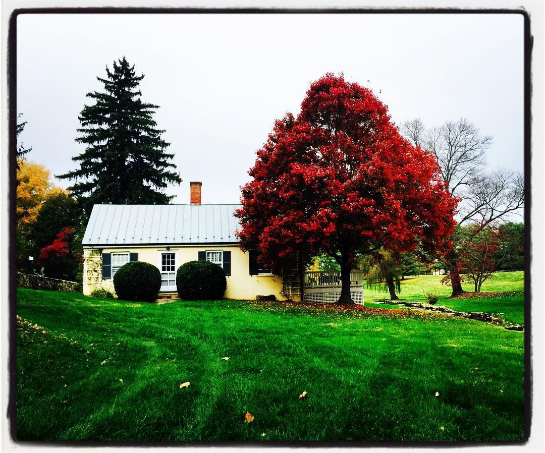 Misty #fall morning in #middleburgva @visitvirginia @visitloudoun #vawine by boxwoodwinery