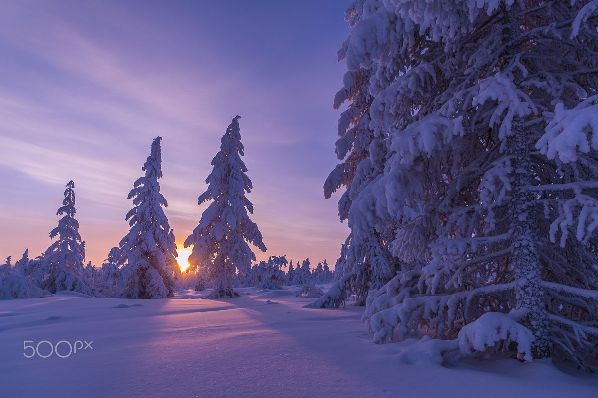 Snow Covered Spruce Trees At Sunset In Winter Backlit Near Stock Photo Royalty Free Image 138045947 Alamy Photo Stock Photos Westphalia