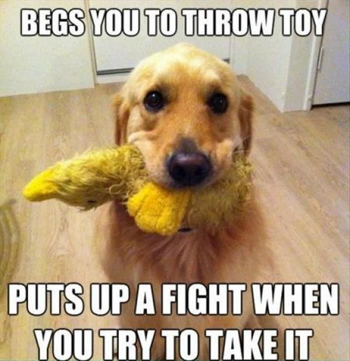 If You Ve Ever Owned A Dog Then These Make Perfect Sense 26 Pics Funny Dog Memes Funny Dog Pictures Dog Logic