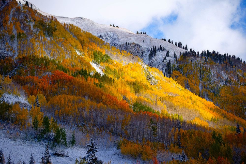 Day 286  Fiery aspens on Red Mountain Pass Colorado