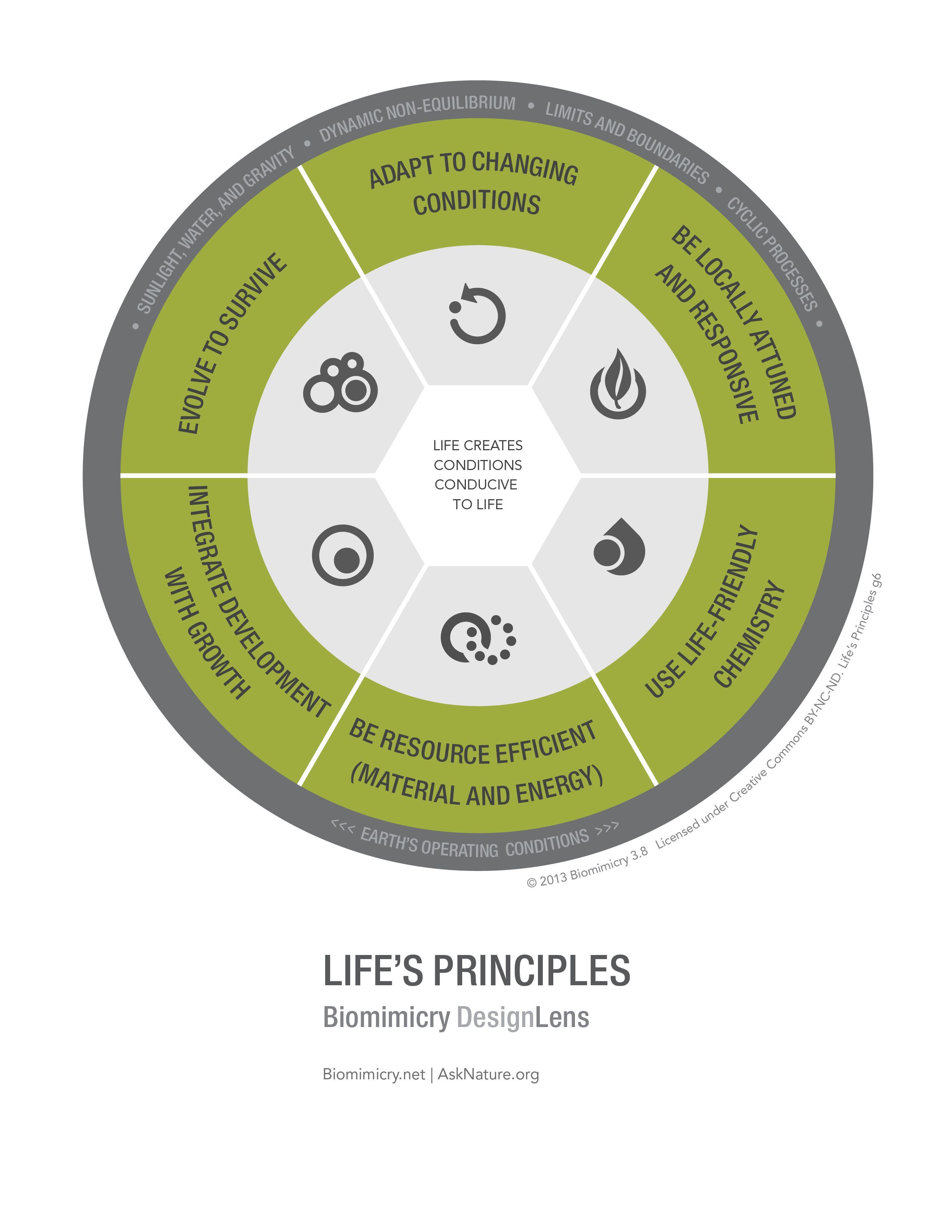 Pin by ventra asana on Biomimicry Circular economy, Life