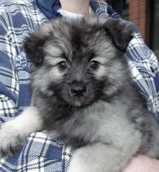 Gorgeous Honden