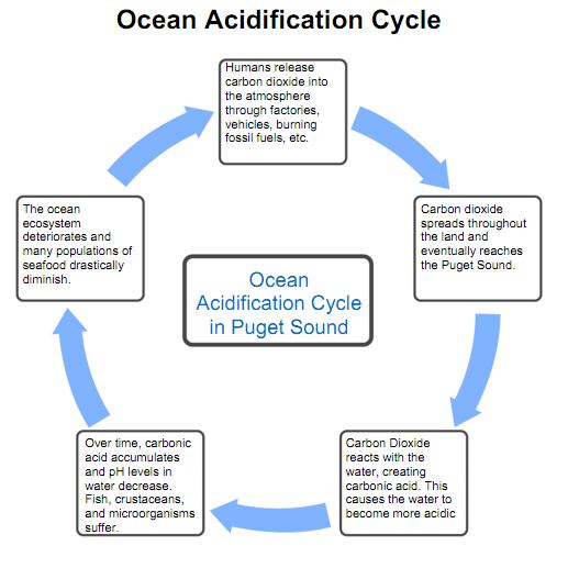ocean acidification cycle diagram | Oceans | Pinterest ...