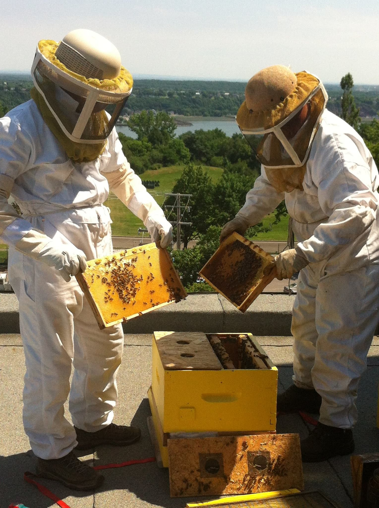 apiculteur onisep