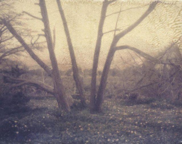 Jared Millar  'Southern Gothic', 2003 Polaroid Photograph