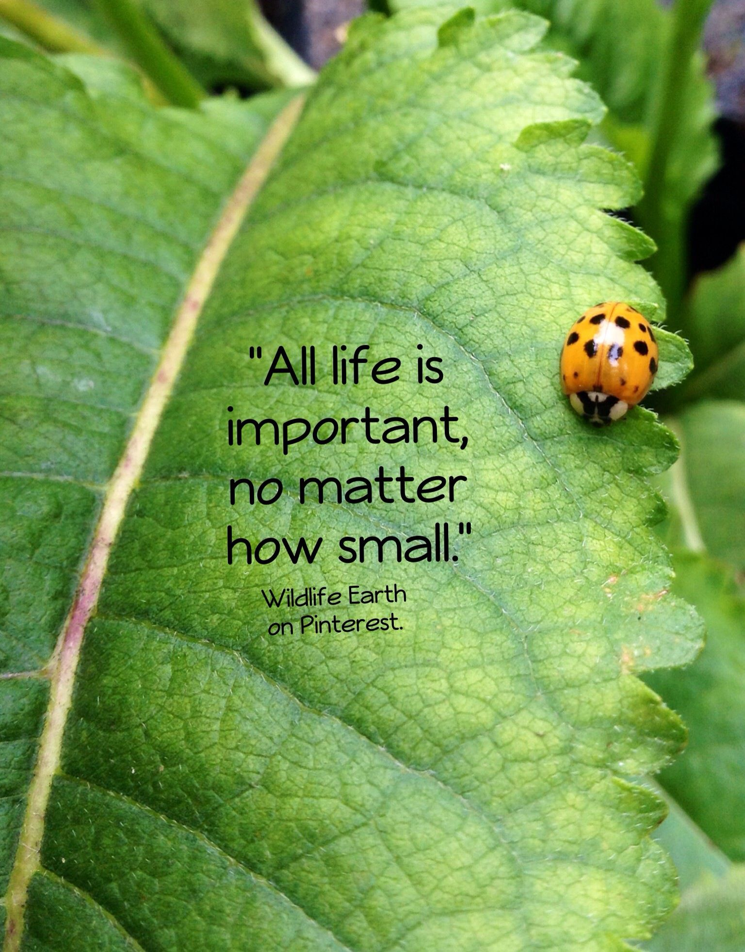 all life matters quotes