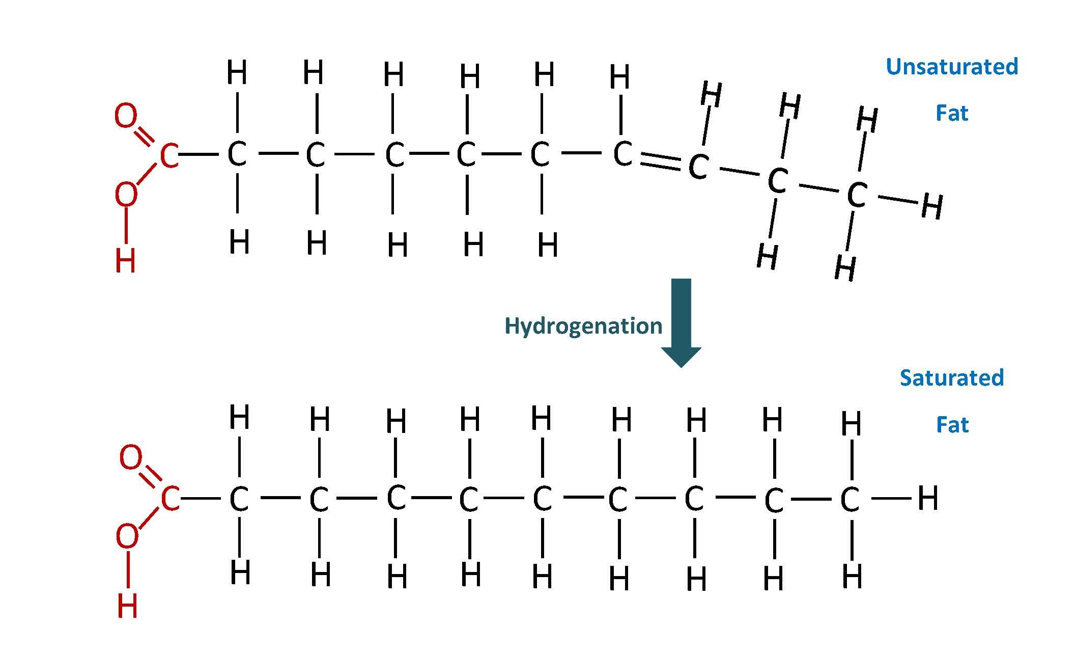 Fat Structure Diagram 2004 Pontiac Grand Prix Starter Wiring Of Unsaturated Lipids Foods Pinterest Food