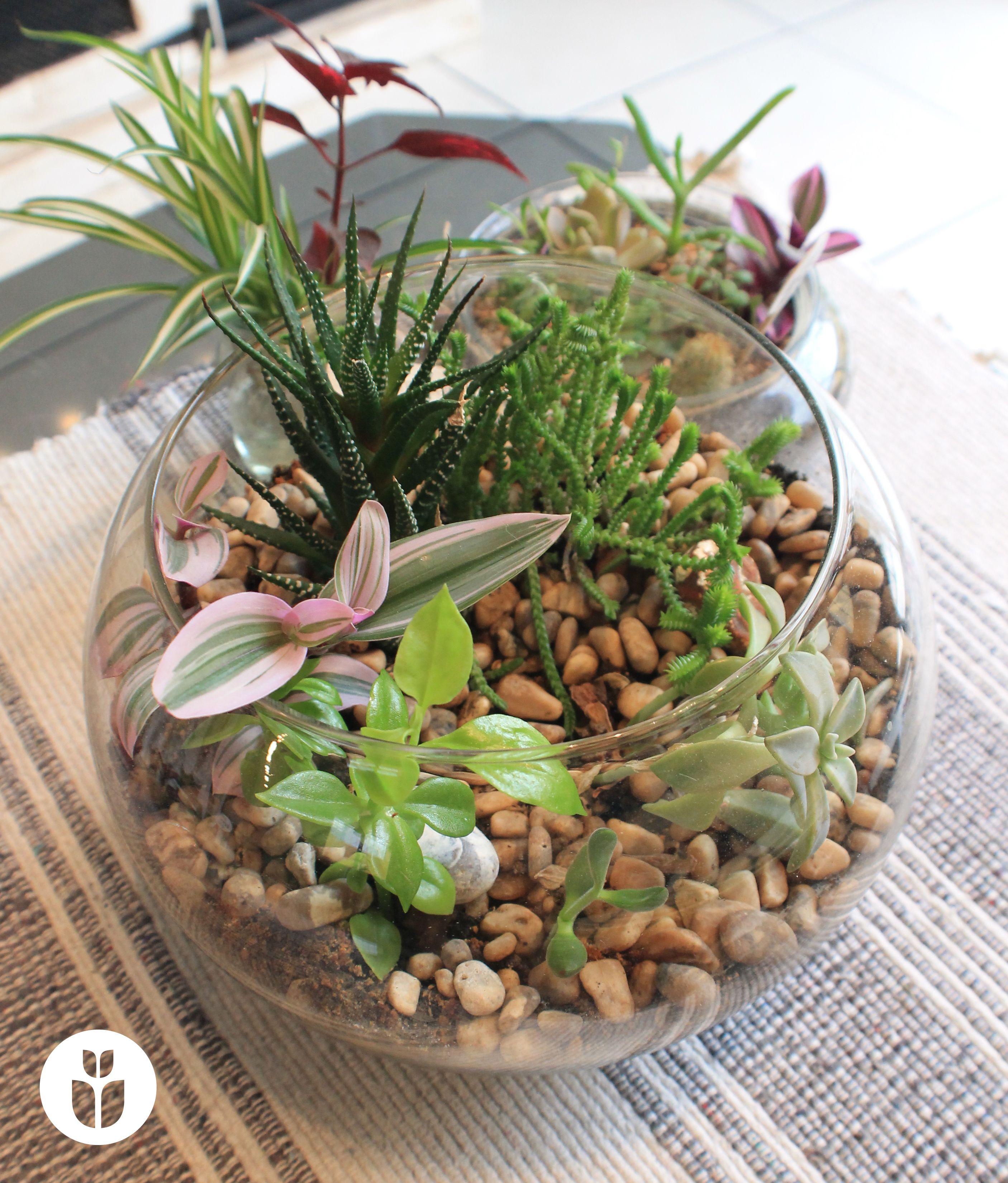 Terrario cactus suculentas terrenario pinterest - Composiciones de cactus ...