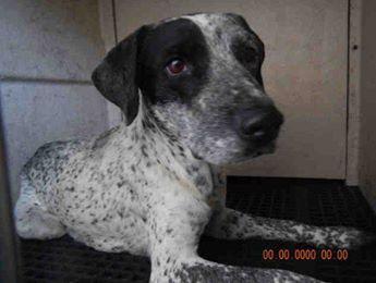 Time Runs Short For Blue Heeler And Her 8 Newborn Puppies In Crowded Texas Shelter Newborn Puppies Blue Heeler Heeler