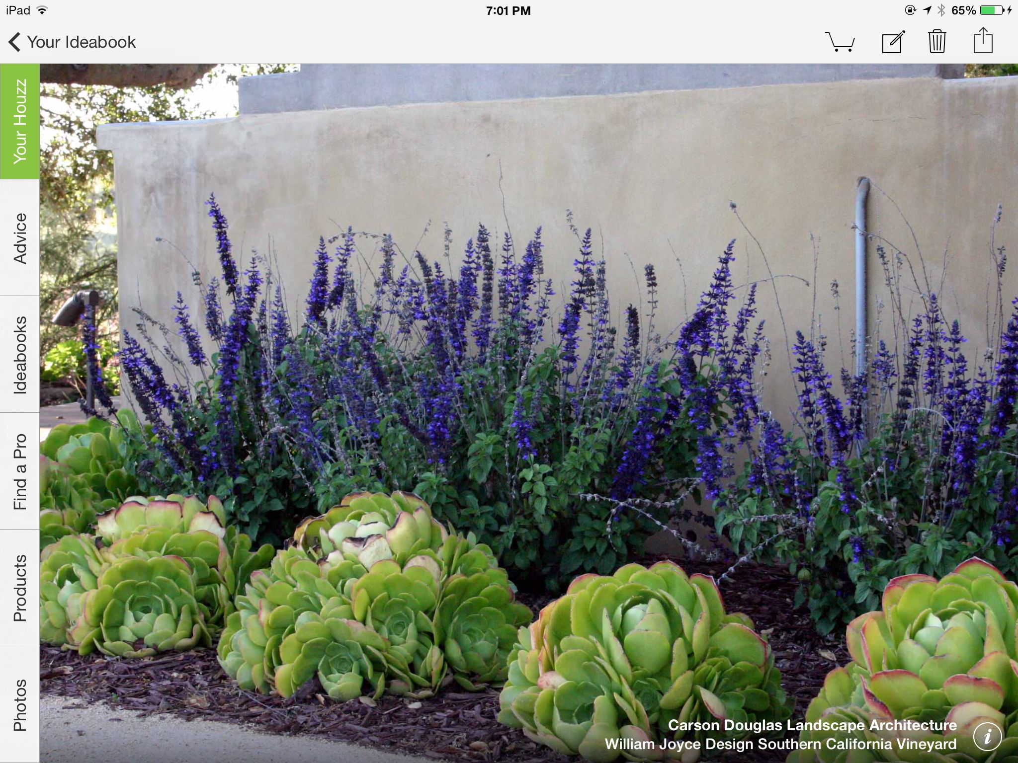Succulents and purple tall flowers succulent plants for Plant landscape design