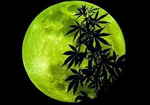 Cannabis Moon