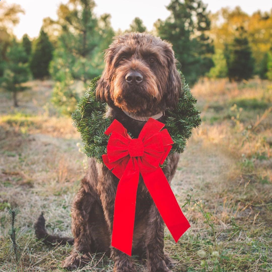 Pin by Kahmila Amazing Dog Admirer on Stunning Doggie