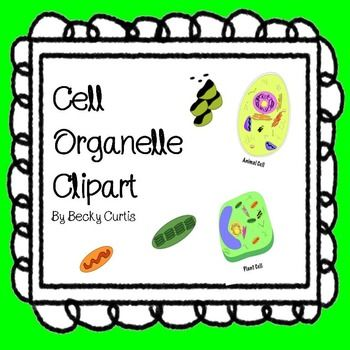 Cell Organelle Clipart Animal Cell Organelles Plant And Animal Cells Cell Parts