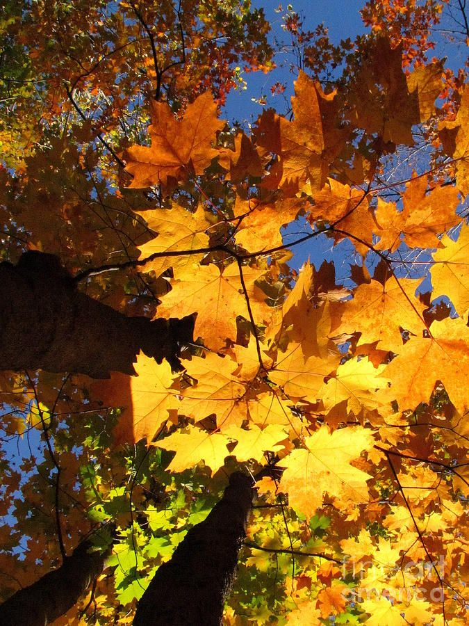 Lights And Fall Autumn art, Fine art america, Fine art