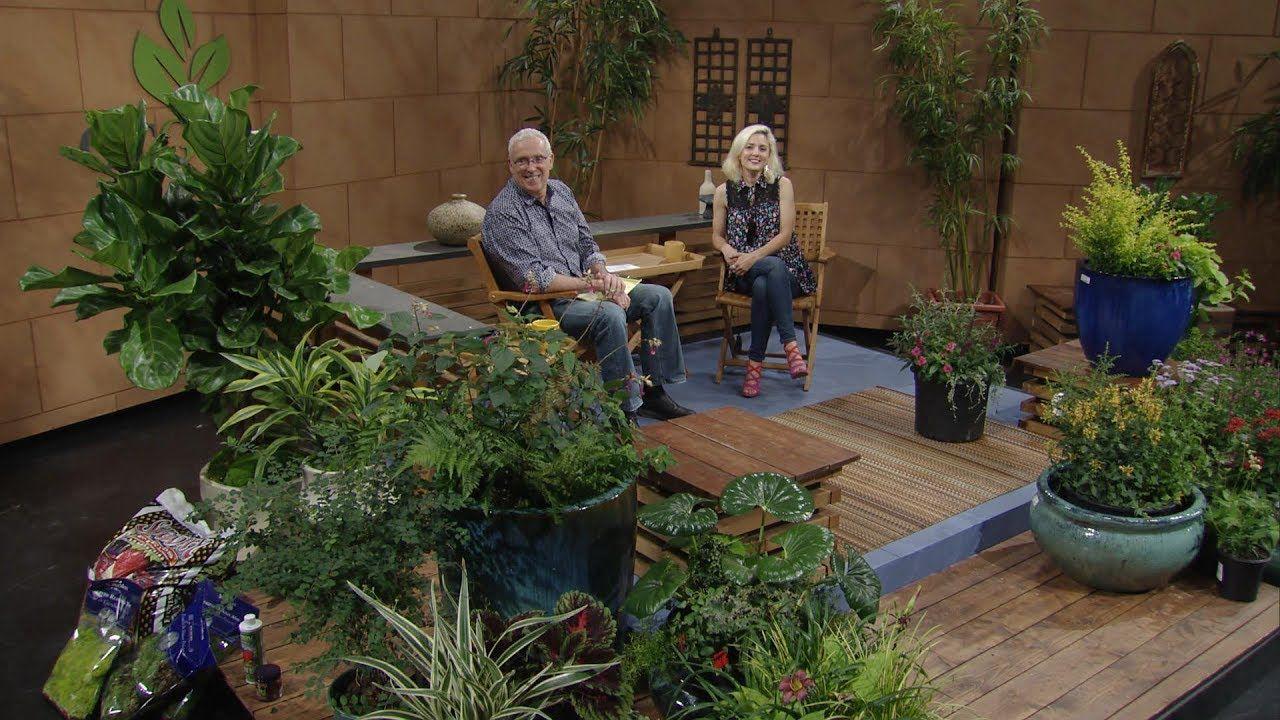 Cool Plants for Summer |Liz Morphis |Central Texas Gardener ...