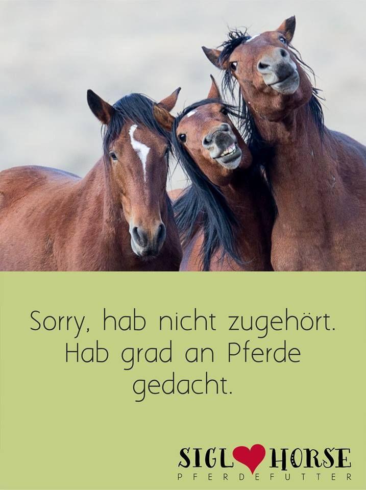 Pferdesprüche Lustig