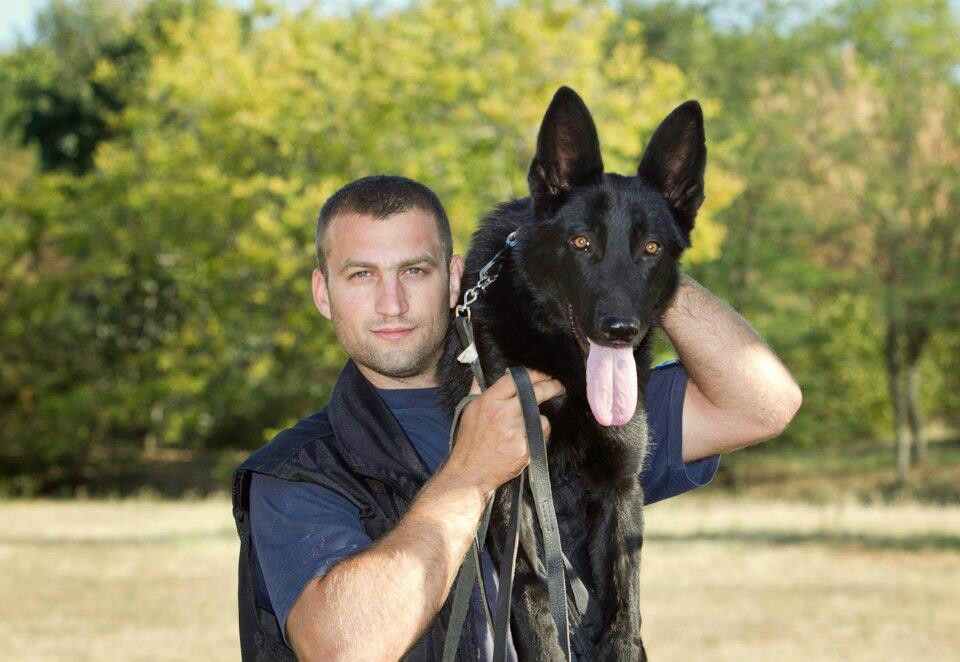 K9 Commando Military Working Dogs Military Dogs Service Dogs